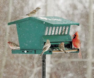 A backyard birdfeeder